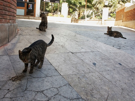 Cats from Sitges, Spain