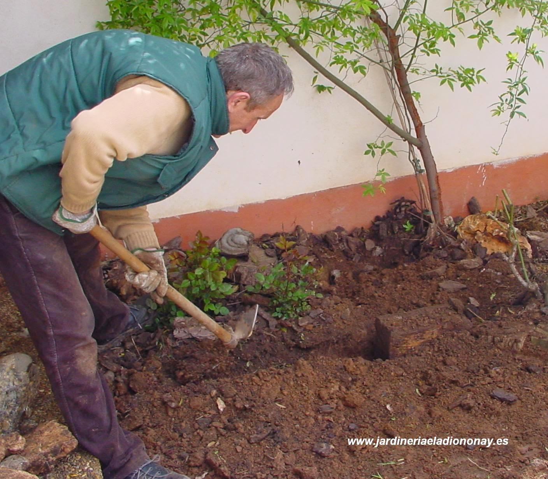 Jardineria eladio nonay cu l es la mejor poca para - Jardineria eladio nonay ...
