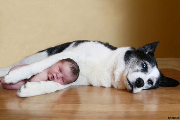 Photo Bébé garçon avec Chien