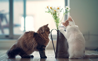 Cats Vase Flowers HD Wallpaper