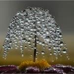 Día da árbore e da auga