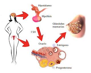 esteroide gh