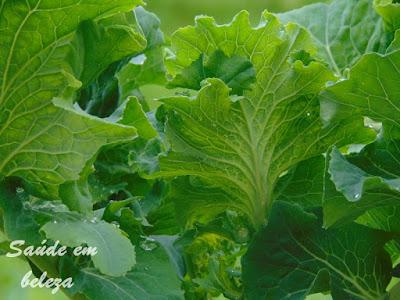 Benefícios da couve o alimento rico em antioxidantes