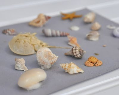 Miniature Shell Collection by Alanna Kellogg, age 8