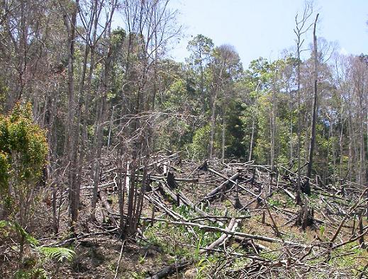 Gambar. Kerusakan Hutan akibat Ulah Manusia