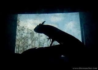 Axolotl, el Dios de Xochimilco por Chico Sánchez - Audiovisuales