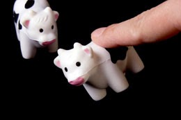 Cow tipping fact or fiction article