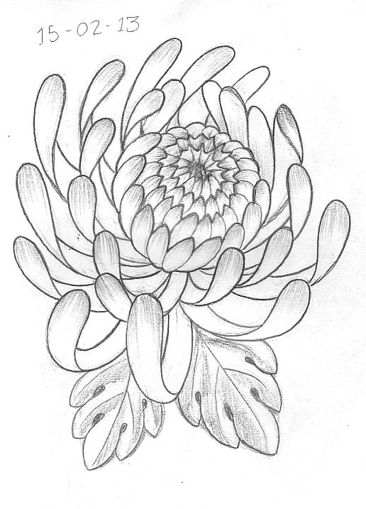 Japanese Flower Line Drawing : Tattoo sketch a day february