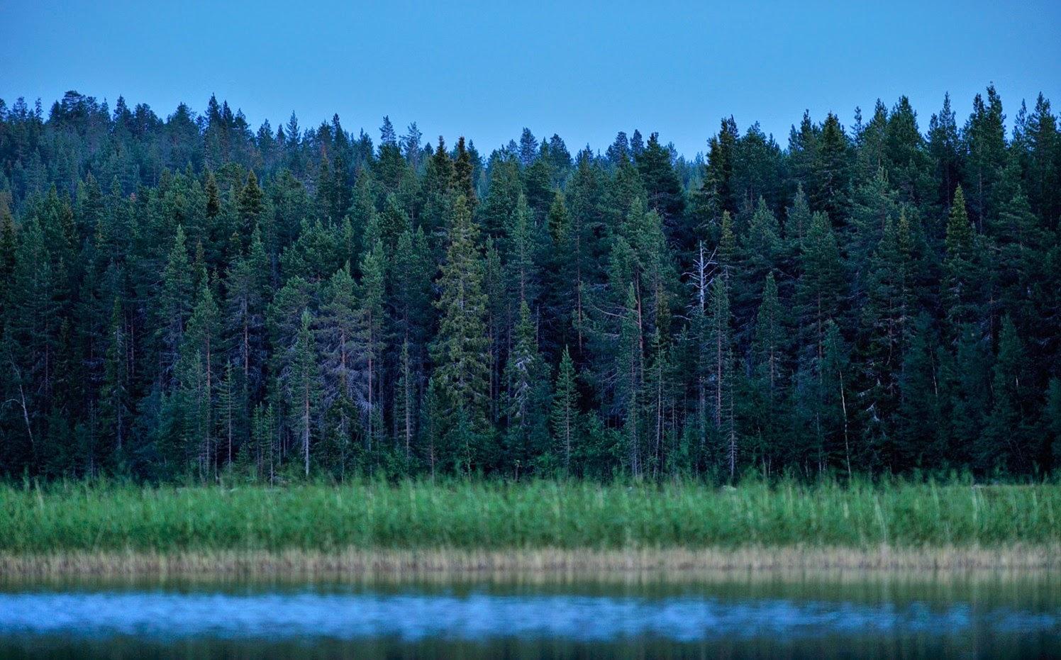 Imparare con la geografia 23 la silvicoltura for Pianta della foresta di pioppo