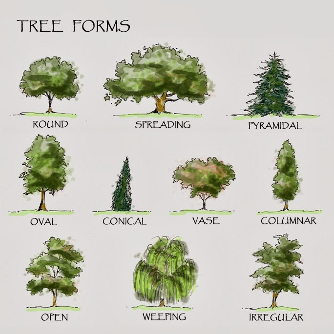 Dot ny gov isions engineering design landscape trees rs selections