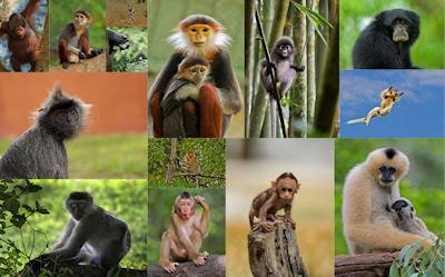 14 fotografías de changos bien monos - Lindos simios
