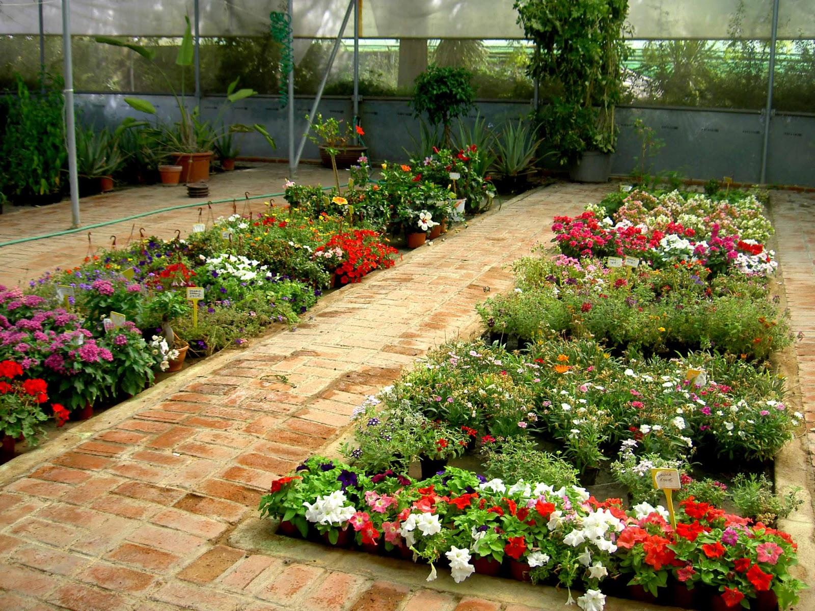 El sello verde entre las plantas del vivero for Plantas de vivero