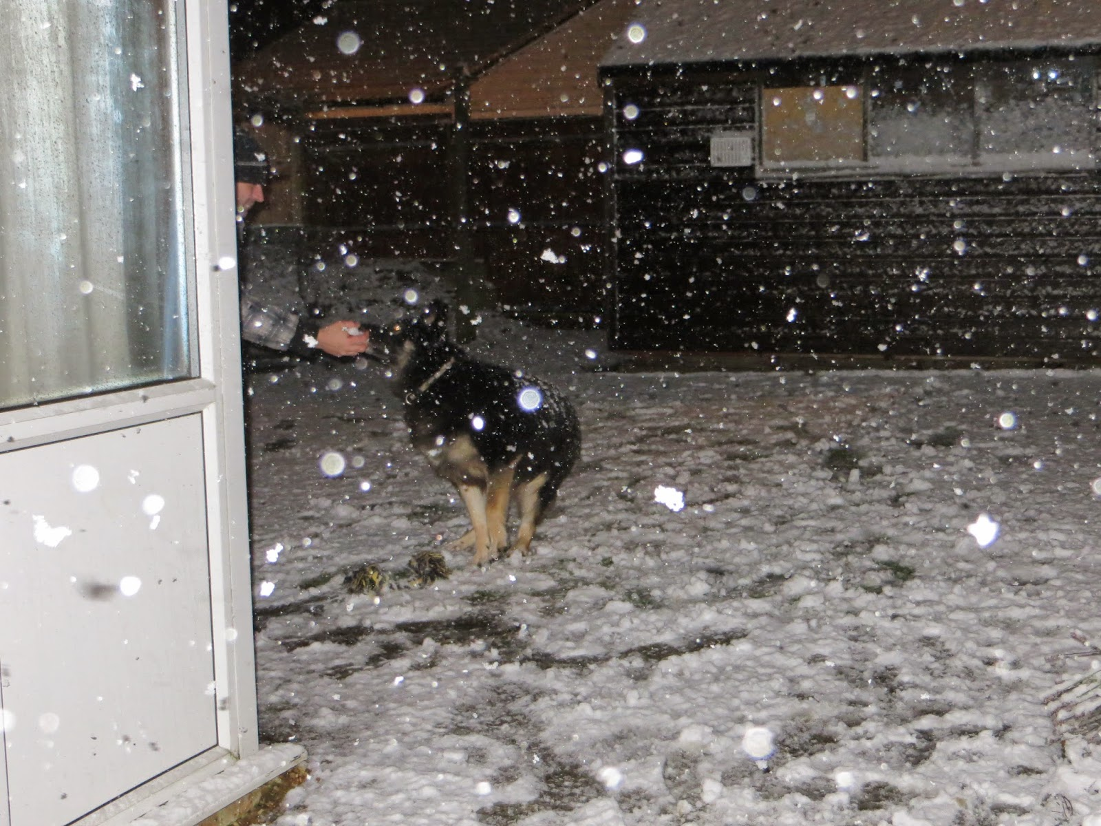 Trojan playing in the snow and eating it!!