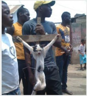 gato cruficado como protesta contra pelicula anti islam musulman
