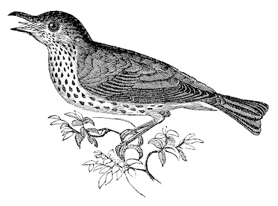 Фото фонда Vintage птица Natural History