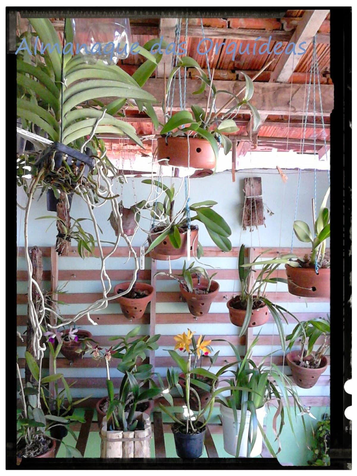 jardim vertical de orquideas : ALMANAQUE DAS ORQU?DEAS: Jardim vertical