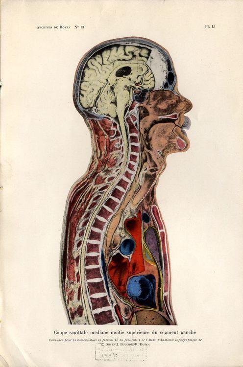 George Morton Illustration: Anatomical Scientific Illustrations.