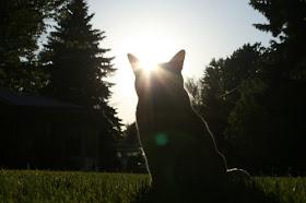 Kucing Blurr :)