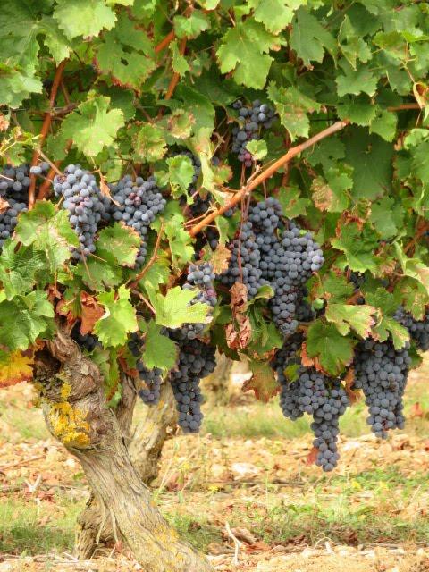 Aimer le bon vin de Loire