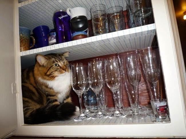 ninja cats playing hide and seek-3