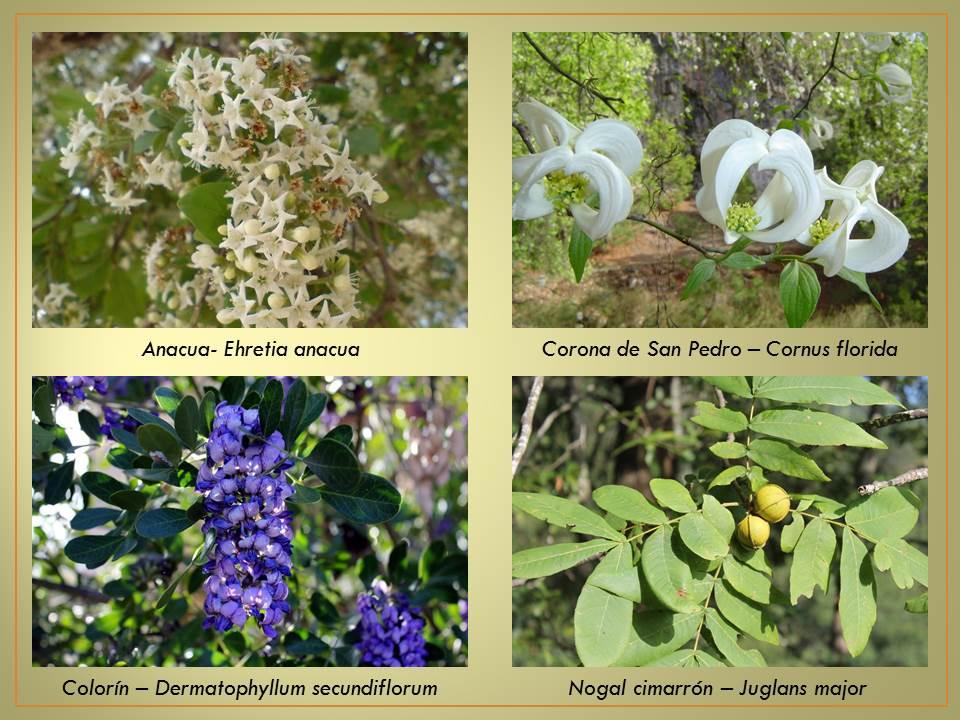 Dibujo de plantas ornamentales con sus nombres imagui for 6 plantas ornamentales
