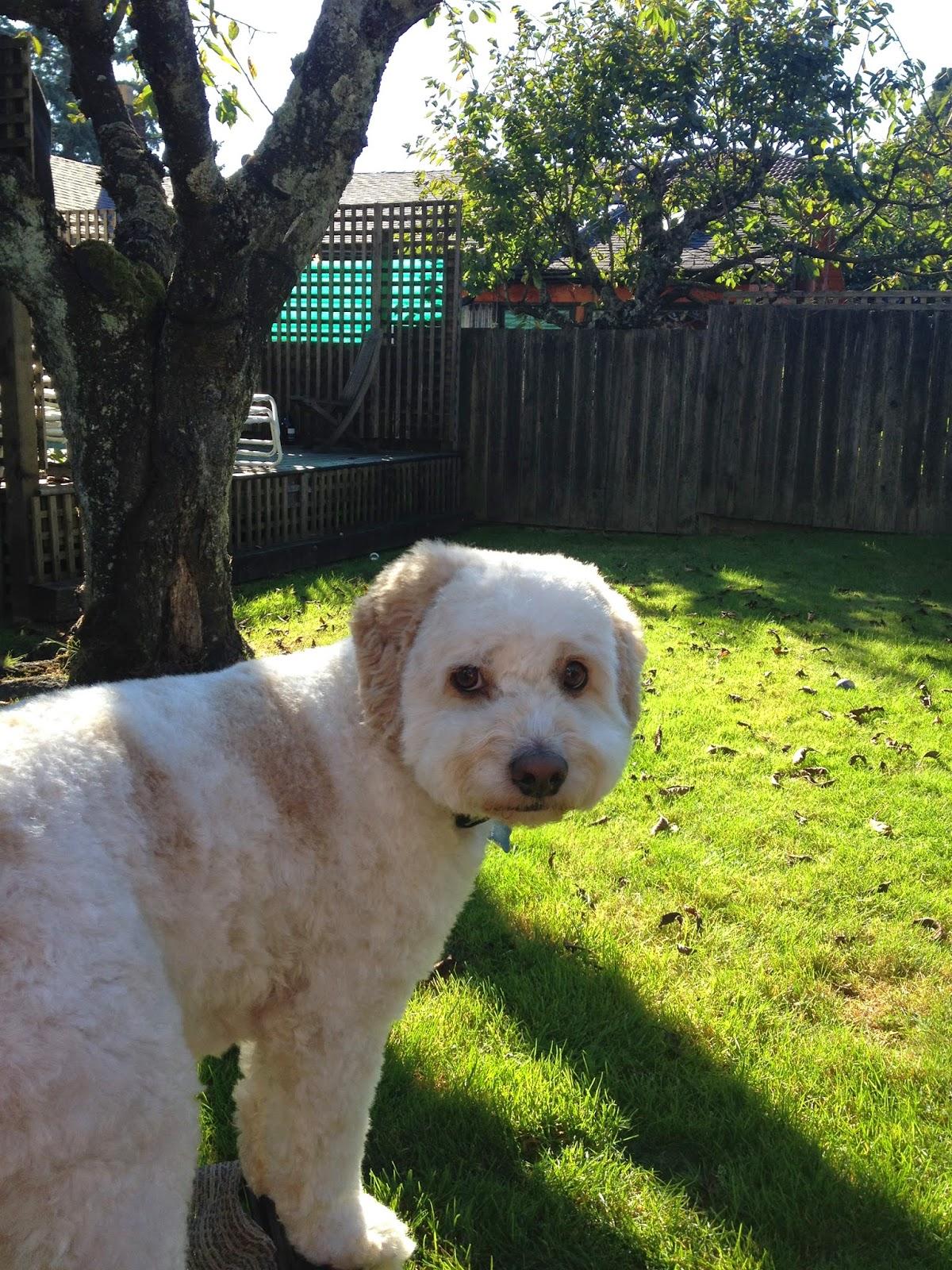 Milo in the sun