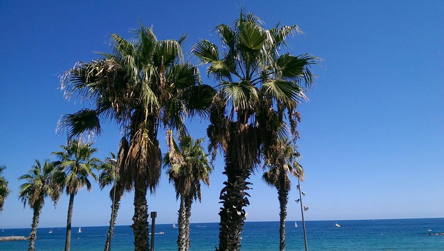 mar Mediterráneo desde restaurante la barraca de la barceloneta, 29/08/2015