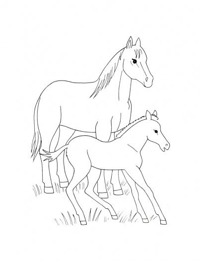 cavalos e filhotes desenho para pintar só idéias