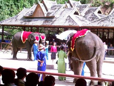 China, Wild Elephant Valley Park in de Provincie Yunnan