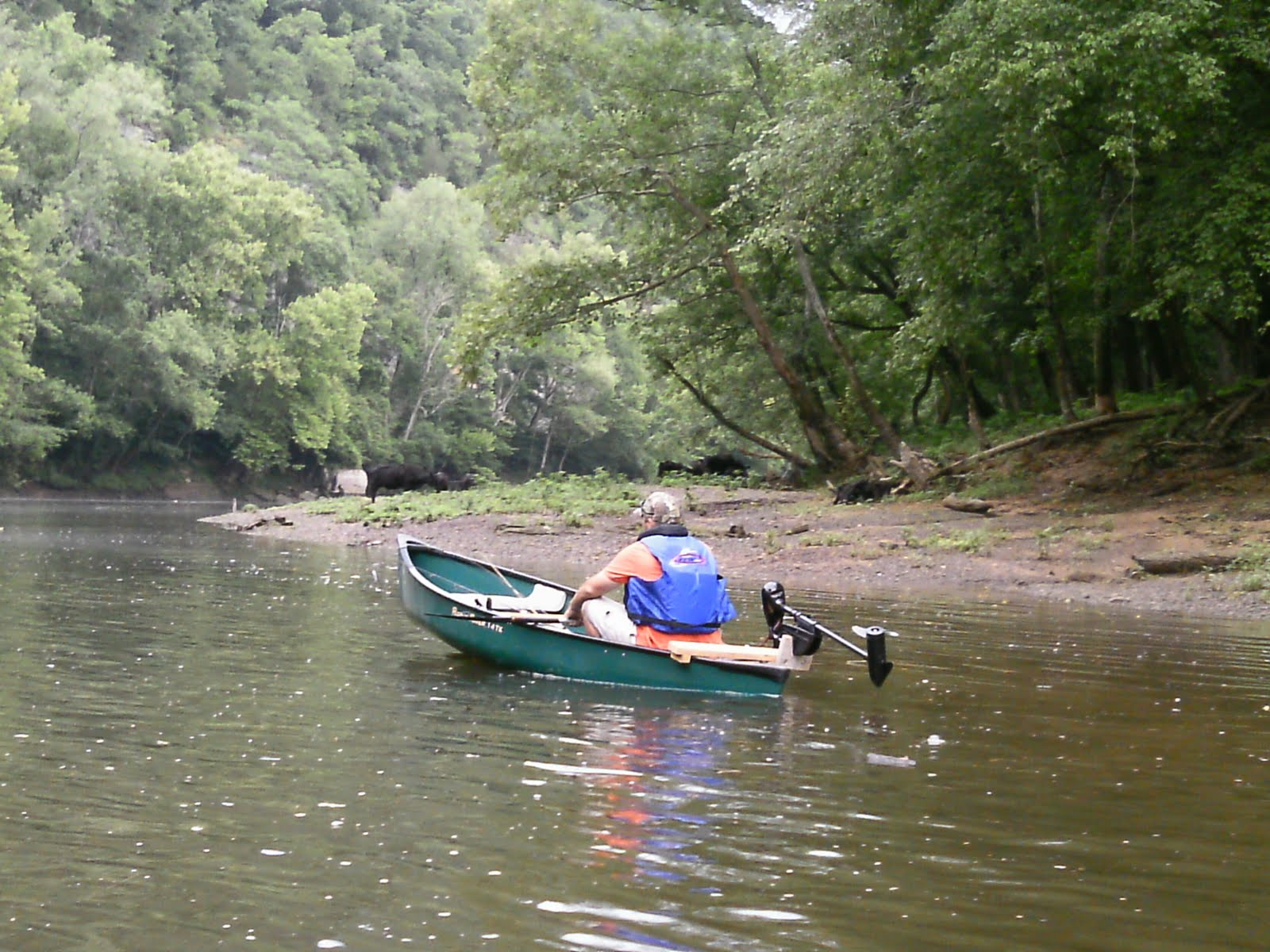 Cumberland river fishing blog 6 18 2011 caney fork for Cumberland river fishing