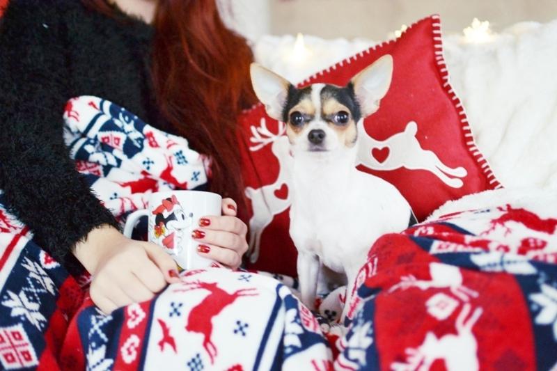 Weihnachtszeit_Chihuahua