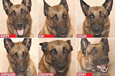 Những cảm xúc khác nhau được thể hiện trên mặt chó - (Ảnh Daily Mail)