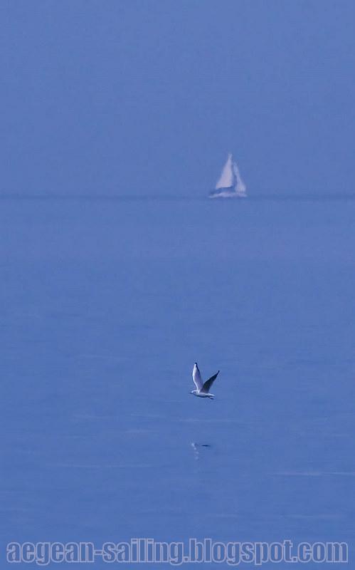 Sail & seagull