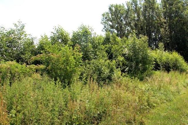 Nordrhein-Westfalen: 1,74 ha Wald in der Hellwegbörde jagdfrei!