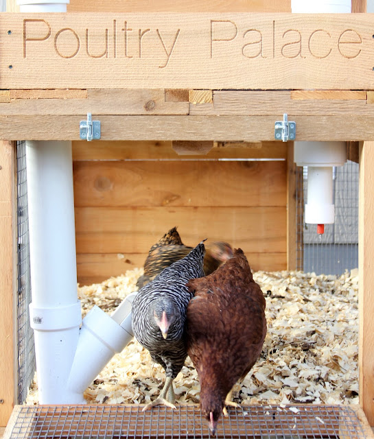 Poultry Palace Coop