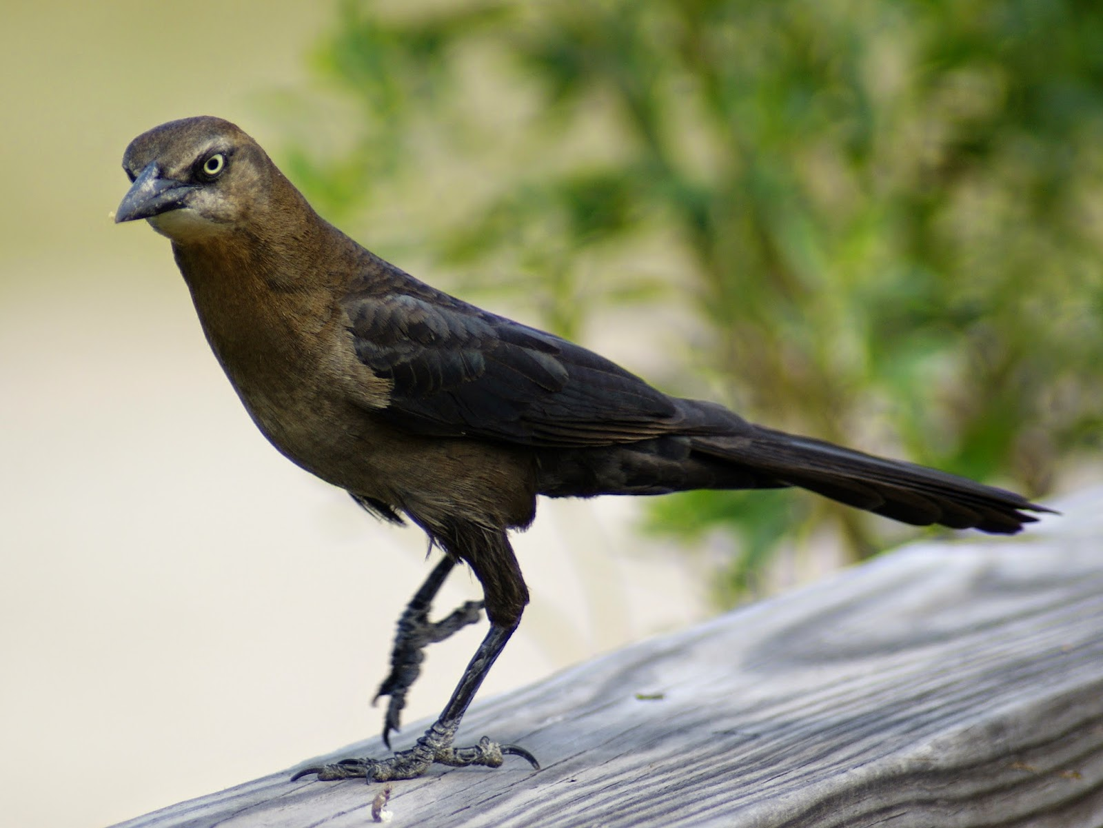 se texas birding u0026 wildlife watching two very different birds