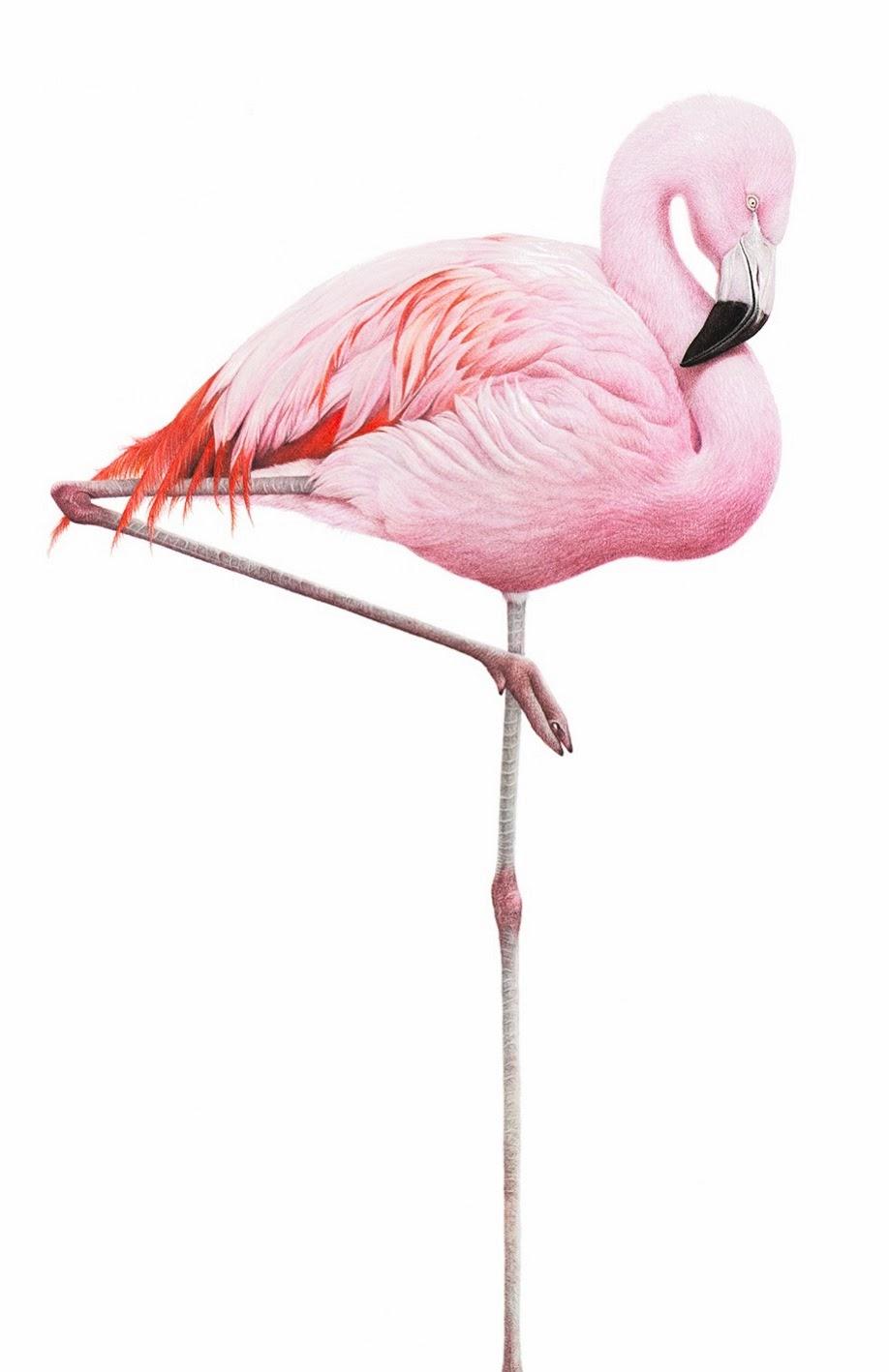 Martin Aveling Art: New Limited Edidtion Flamingo Print