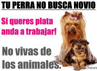 DI NO A LA CRIA Y VENTA DE ANIMALES