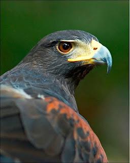 %D8%B7%D9%8A%D9%88%D8%B137 صور رمانسية طبيعية لأجمل الطيور 2014