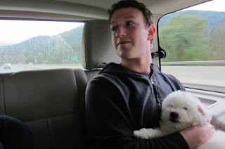 Mark Zuckerberg hairstyle