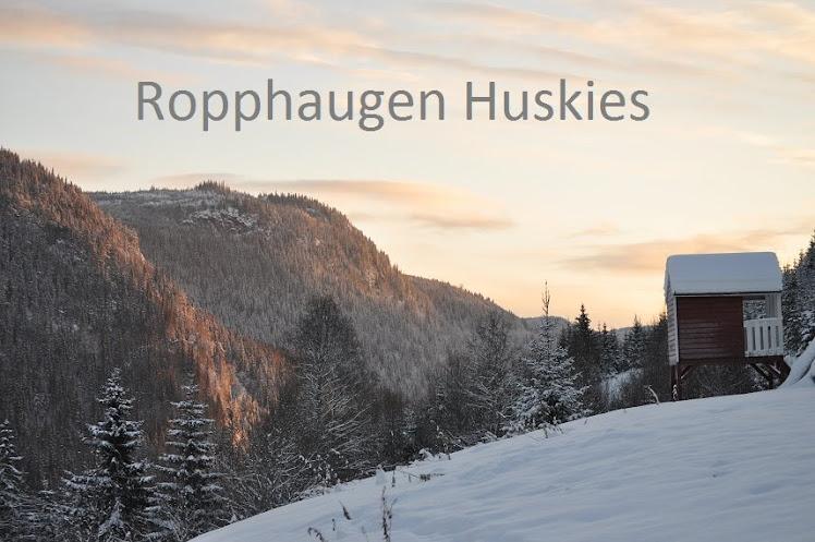 Ropphaugen Huskies