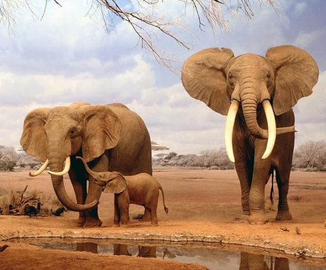 Elephant-animal