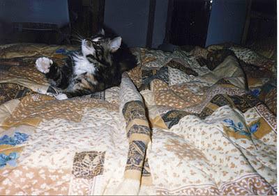Kattunge på säng, med höjd tass. foto: Wanda D