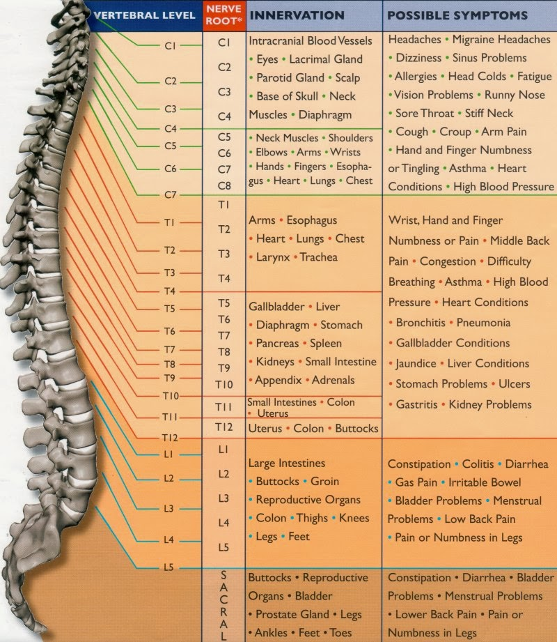 Spinal Nerve Function Chart Useful Information