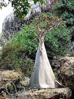 [Image: 1.1287790796.34_socotra-yemen.jpg]