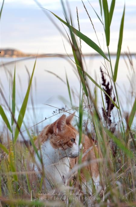 cat hunting in dusk
