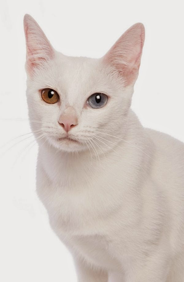 Top 5 Unusual Cat Breeds