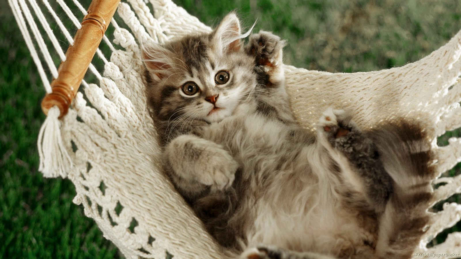 15 Widescreen Cats Wallpapers | Bollywood HD Most ...