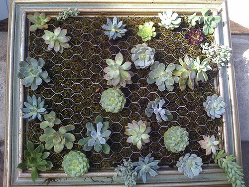 I Absolutely Love Ready Made, Just About As Much As I Love Instructables.  Anyway, Hereu0027s The Tutorial: Framed Succulent Garden.