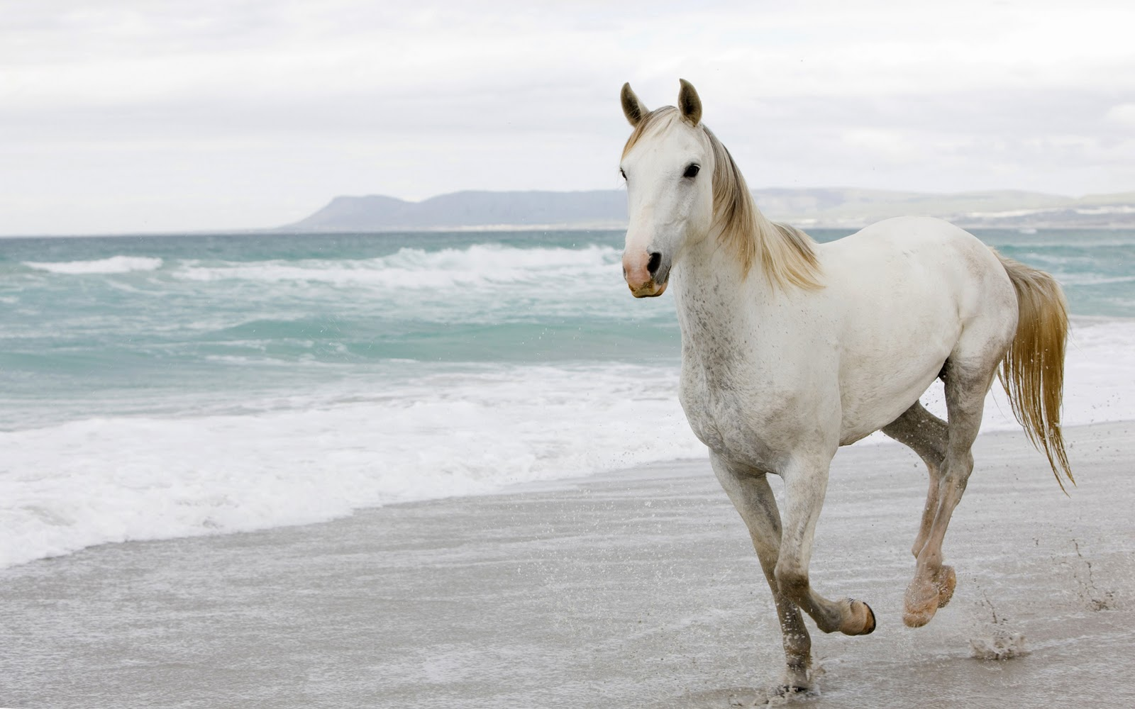 White Horses Wallpapers - Entertainment Only - photo#3